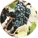Lissage enzymothérapy au tanin de raisin MAG Coiffure Strasbourg